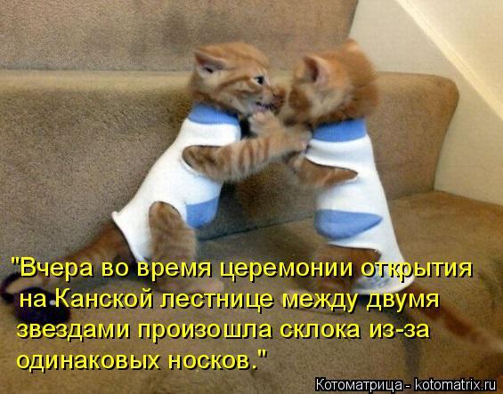 """Котоматрица: """"Вчера во время церемонии открытия на Канской лестнице между двумя  звездами произошла склока из-за одинаковых носков."""""""