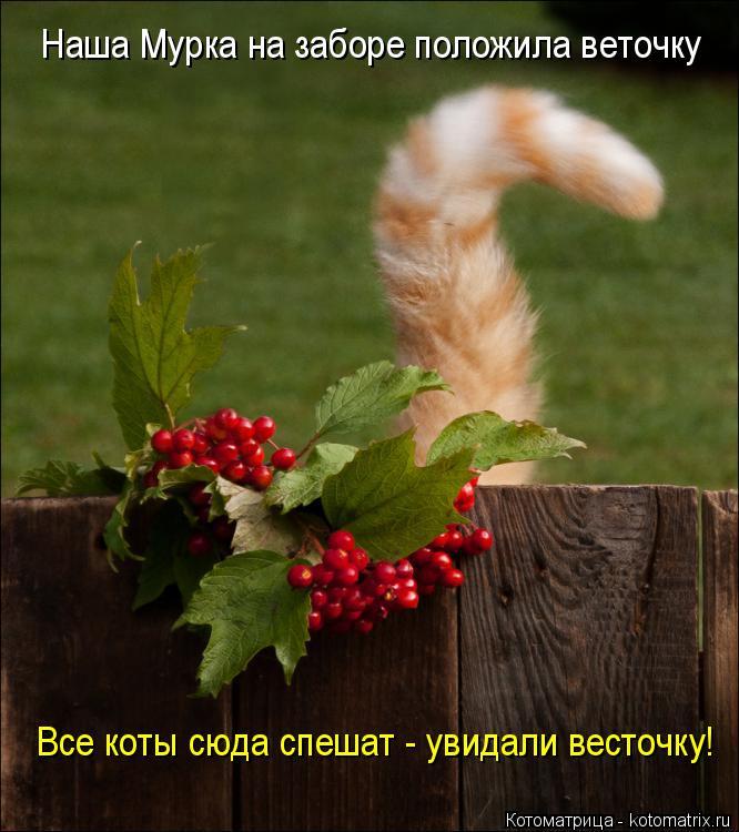 Котоматрица: Наша Мурка на заборе положила веточку Все коты сюда спешат - увидали весточку!