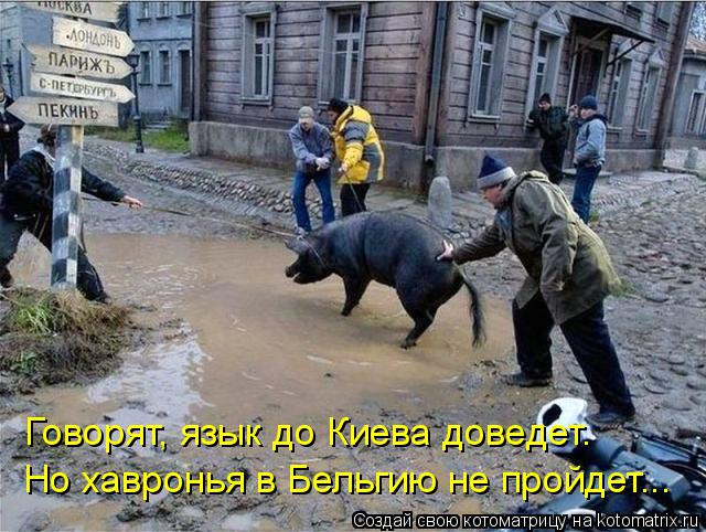 Котоматрица: Говорят, язык до Киева доведет. Но хавронья в Бельгию не пройдет...
