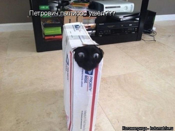 Котоматрица: Петрович,пылисос ушёл???