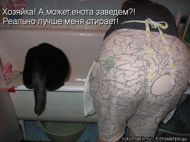 Котоматрица: Хозяйка! А,может,енота заведем?! Реально лучше меня стирает!