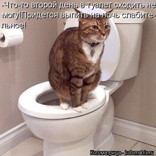 Котоматрица: -Что-то второй день в туалет сходить не могу!Придётся выпить на ночь слабите- льное!