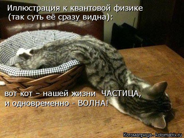 Котоматрица: Иллюстрация к квантовой физике (так суть её сразу видна): вот кот – нашей жизни  ЧАСТИЦА, и одновременно - ВОЛНА!