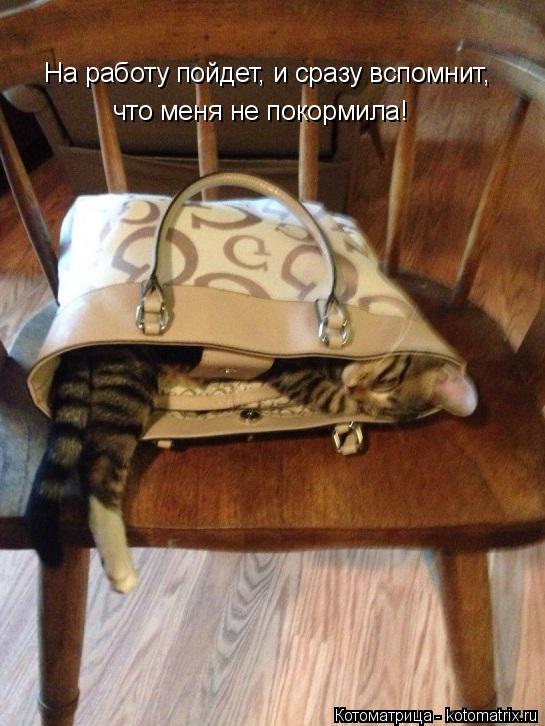 Котоматрица: На работу пойдет, и сразу вспомнит,  что меня не покормила!