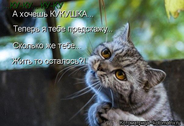 Котоматрица: А хочешь КУКУШКА... Сколько же тебе... Жить то осталось?! ...КУ-КУ... КУ-КУ Теперь я тебе предскажу...