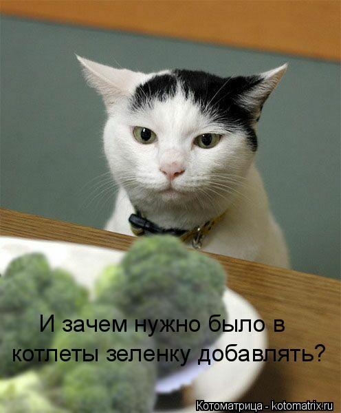 Котоматрица: И зачем нужно было в котлеты зеленку добавлять?