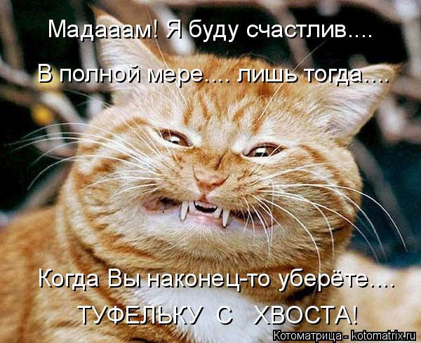 Котоматрица: Мадааам! Я буду счастлив.... В полной мере.... лишь тогда.... Когда Вы наконец-то уберёте.... ТУФЕЛЬКУ  С   ХВОСТА!