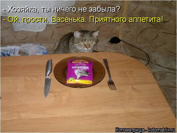 Котоматрица: - Хозяйка, ты ничего не забыла? - Ой, прости, Васенька. Приятного аппетита!