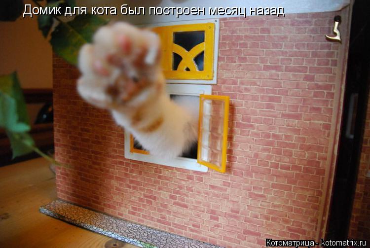 Котоматрица: Домик для кота был построен месяц назад