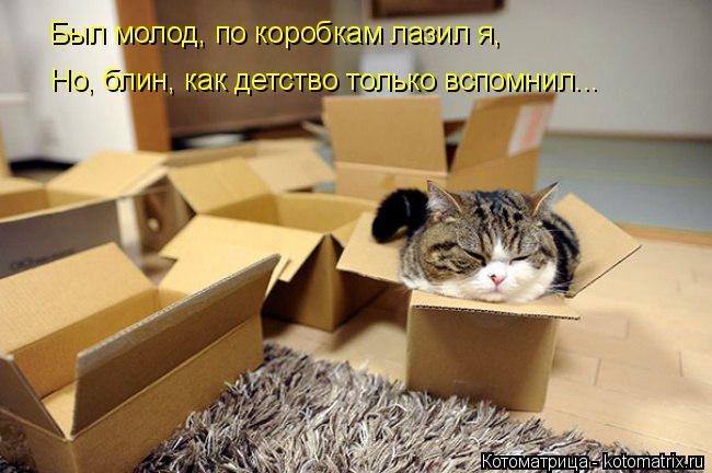 Котоматрица: Был молод, по коробкам лазил я, Но, блин, как детство только вспомнил...