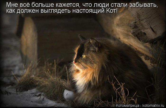 Котоматрица: Мне всё больше кажется, что люди стали забывать, как должен выглядеть настоящий Кот!