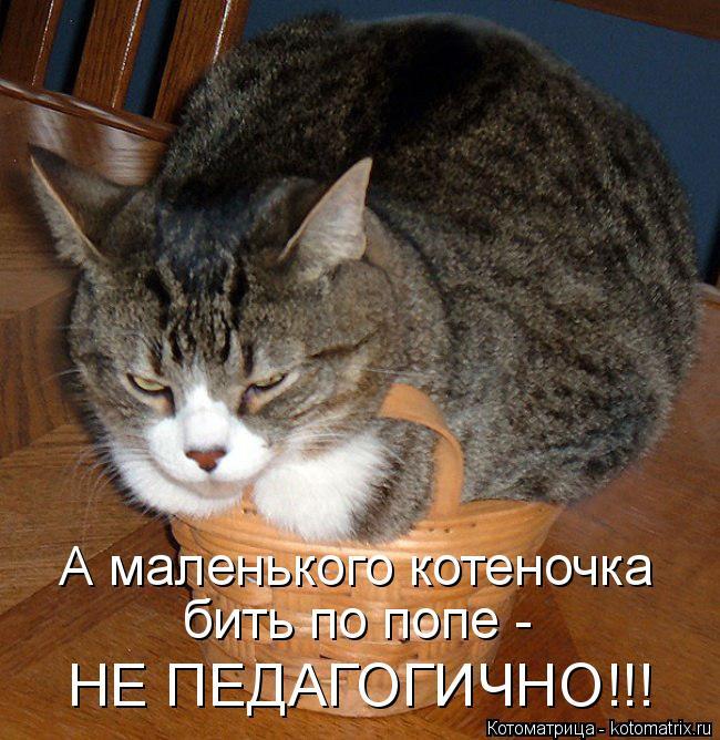Котоматрица: А маленького котеночка  бить по попе -  НЕ ПЕДАГОГИЧНО!!!