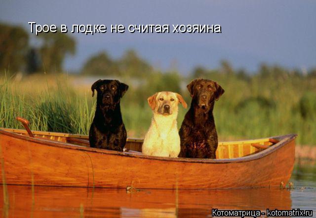 Котоматрица: Трое в лодке не считая хозяина