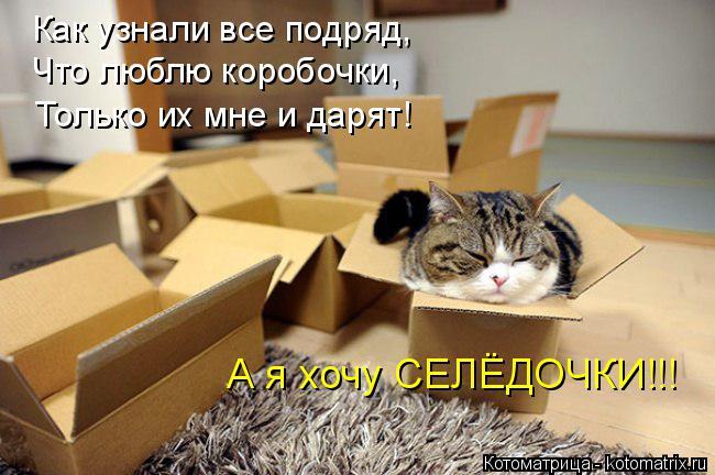 Котоматрица: Как узнали все подряд, Что люблю коробочки, Только их мне и дарят! А я хочу СЕЛЁДОЧКИ!!!