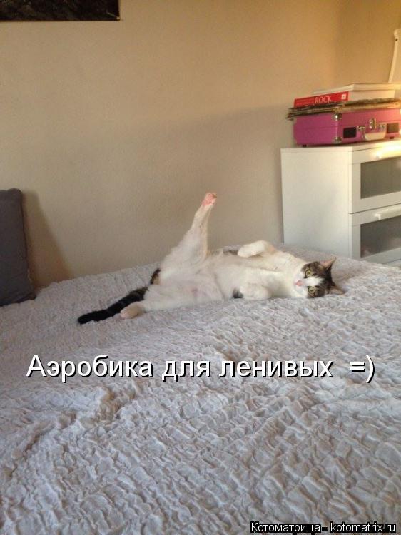 Котоматрица: Аэробика для ленивых  =)
