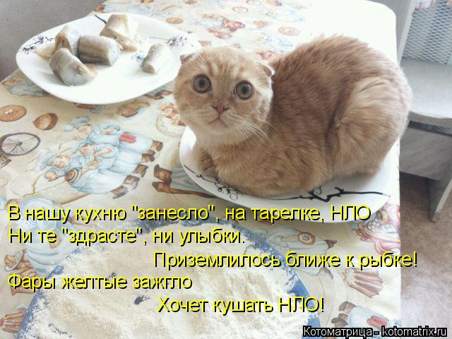"""Котоматрица: В нашу кухню """"занесло"""", на тарелке, НЛО  Ни те """"здрасте"""", ни улыбки.  Приземлилось ближе к рыбке!   Фары желтые зажгло Хочет кушать НЛО!"""