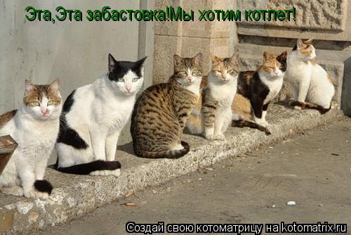 Котоматрица: Эта,Эта забастовка!Мы хотим котлет!
