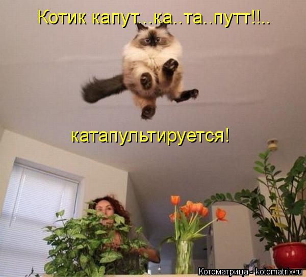 http://kotomatrix.ru/images/lolz/2014/08/28/kotomatritsa_Ze.jpg