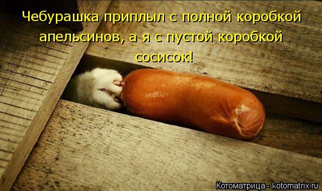 Котоматрица: Чебурашка приплыл с полной коробкой апельсинов, а я с пустой коробкой  сосисок!