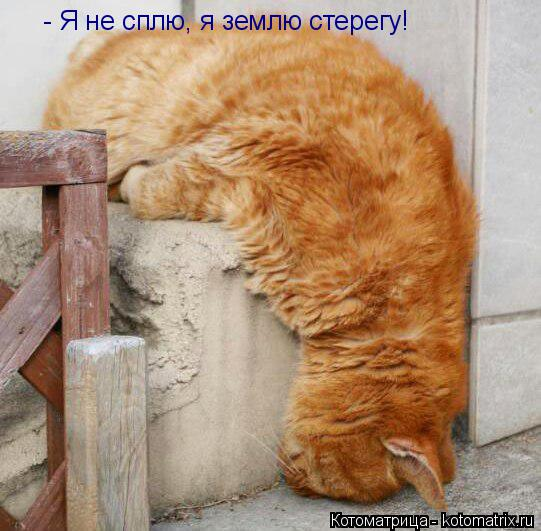 Котоматрица: - Я не сплю, я землю стерегу!