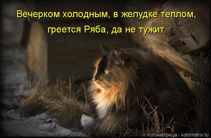 Котоматрица: Вечерком холодным, в желудке теплом, греется Ряба, да не тужит.