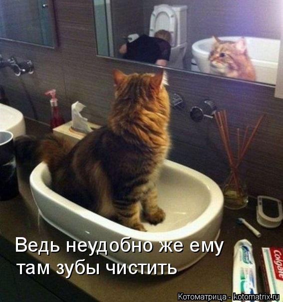 Котоматрица: Ведь неудобно же ему  там зубы чистить
