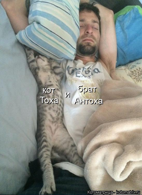 Котоматрица: кот Тоха и брат Антоха