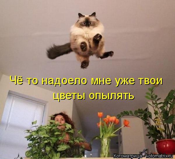 Котоматрица: Чё то надоело мне уже твои цветы опылять