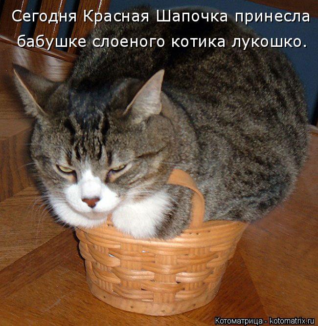 Котоматрица: Сегодня Красная Шапочка принесла бабушке слоеного котика лукошко.