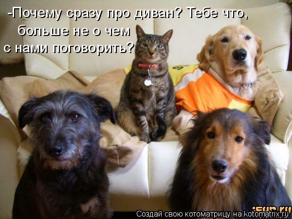 Котоматрица: -Почему сразу про диван? Тебе что,  больше не о чем с нами поговорить?