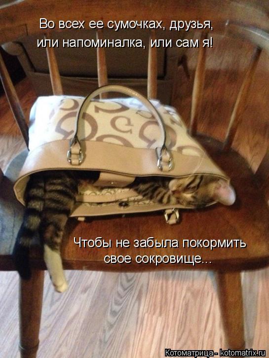 Котоматрица: Во всех ее сумочках, друзья,  или напоминалка, или сам я! Чтобы не забыла покормить  свое сокровище...