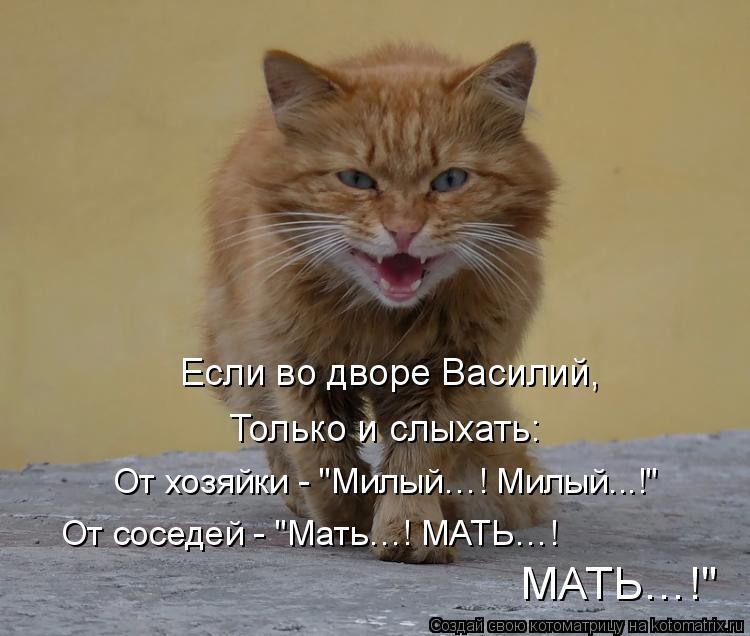 """Котоматрица: Если во дворе Василий, Только и слыхать: От хозяйки - """"Милый…! Милый...!"""" От соседей - """"Мать…! МАТЬ…! МАТЬ…!"""""""