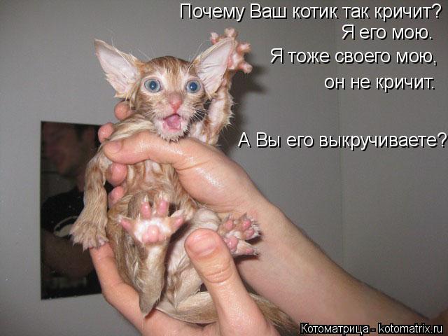 Котоматрица: Почему Ваш котик так кричит? Я его мою.  Я тоже своего мою,    он не кричит.  А Вы его выкручиваете?