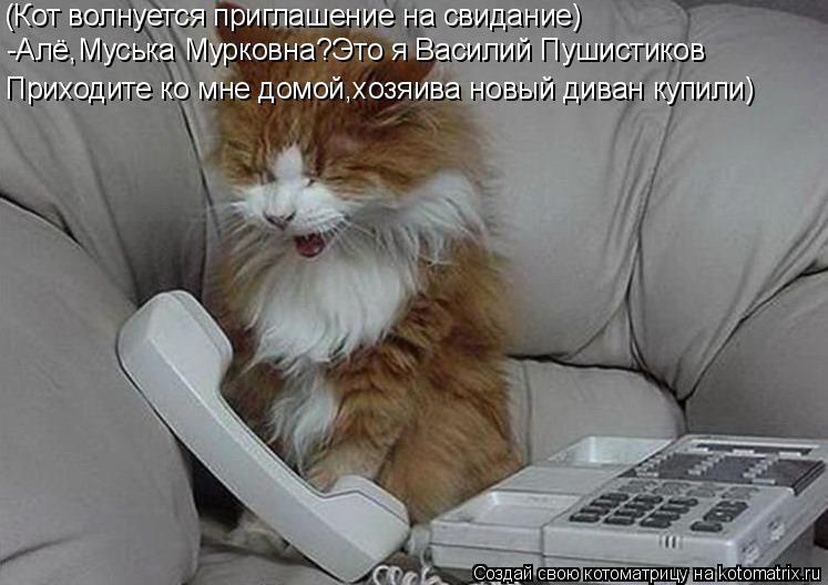 Котоматрица: (Кот волнуется приглашение на свидание) -Алё,Муська Мурковна?Это я Василий Пушистиков Приходите ко мне домой,хозяива новый диван купили)