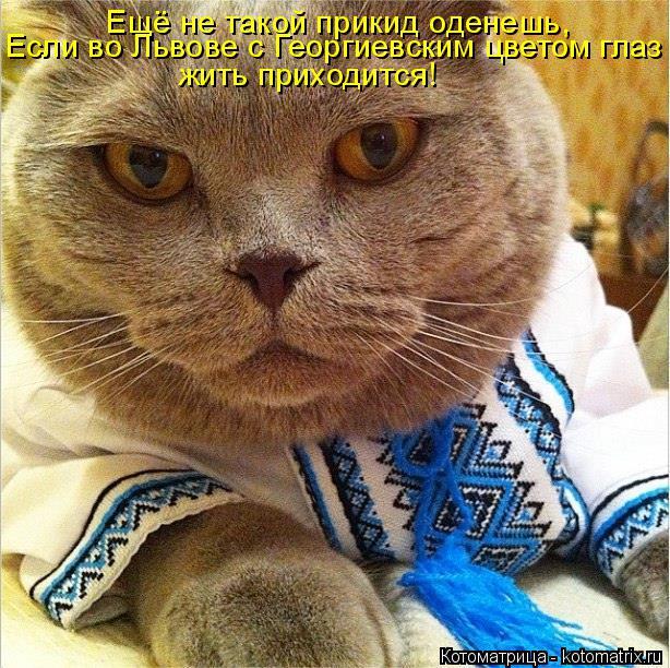 Котоматрица: Ещё не такой прикид оденешь, Если во Львове с Георгиевским цветом глаз жить приходится!