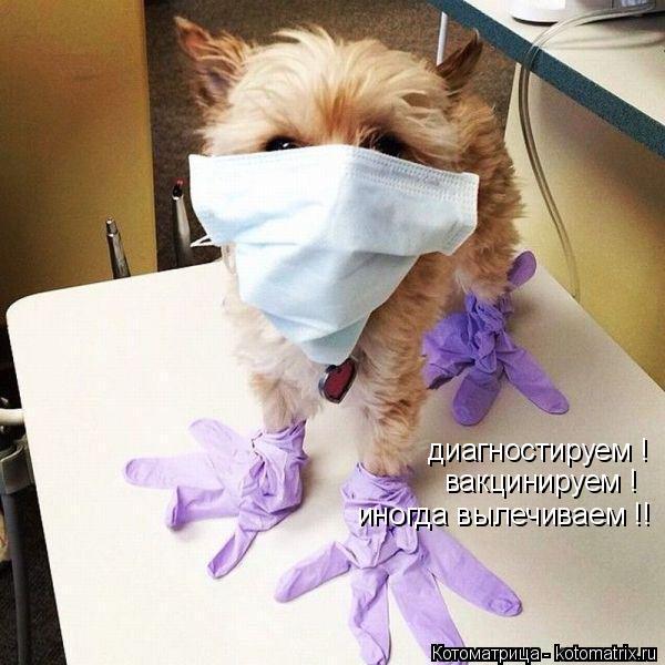 Котоматрица: диагностируем ! вакцинируем ! иногда вылечиваем !!