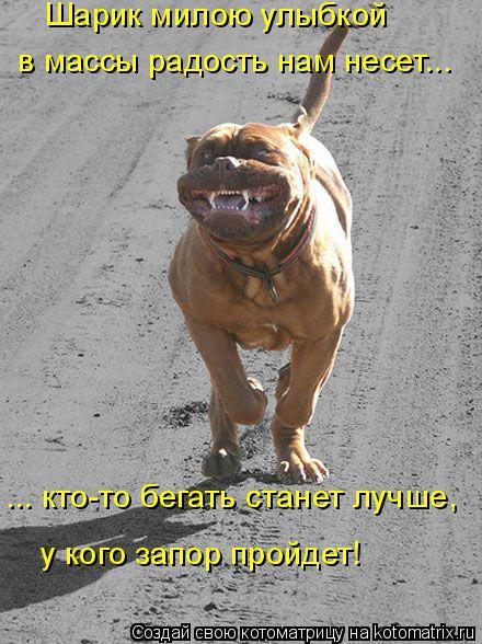 Котоматрица: Шарик милою улыбкой в массы радость нам несет... ... кто-то бегать станет лучше, у кого запор пройдет!