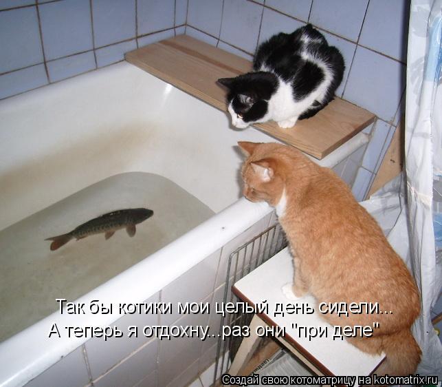 """Котоматрица: Так бы котики мои целый день сидели... А теперь я отдохну...раз они """"при деле"""""""