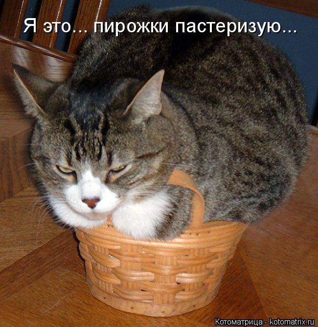 Котоматрица: Я это... пирожки пастеризую...