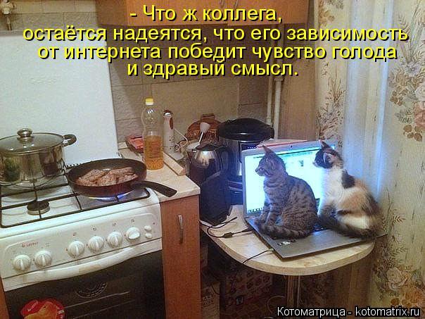 Котоматрица: - Что ж коллега, остаётся надеятся, что его зависимость  от интернета победит чувство голода и здравый смысл.