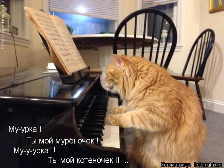 Котоматрица: Ты мой котёночек !!!... Му-у-урка !! Ты мой мурёночек ! Му-урка !