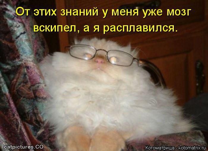 Котоматрица: От этих знаний у меня уже мозг  вскипел, а я расплавился.