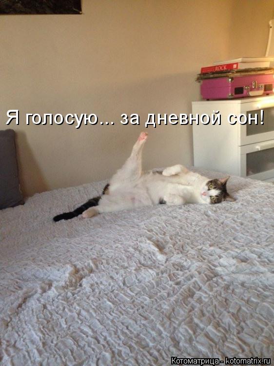 http://kotomatrix.ru/images/lolz/2014/08/29/kotomatritsa_W1n.jpg