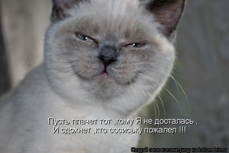 Котоматрица: Пусть плачет тот ,кому Я не досталась , И сдохнет ,кто сосиську пожалел !!!
