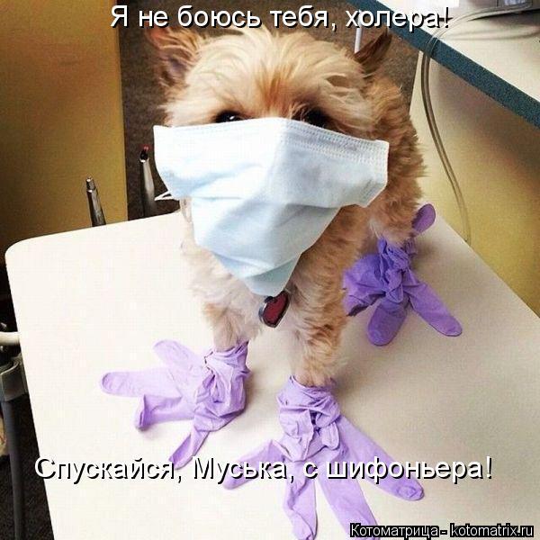 Котоматрица: Я не боюсь тебя, холера!  Спускайся, Муська, с шифоньера!
