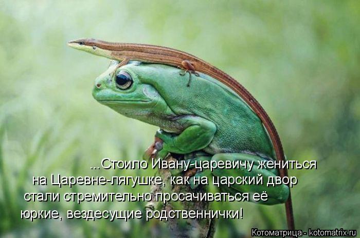 Котоматрица: ...Стоило Ивану-царевичу жениться  на Царевне-лягушке, как на царский двор стали стремительно просачиваться её юркие, вездесущие родственни