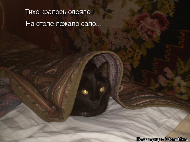 Котоматрица: Тихо кралось одеяло На столе лежало сало...