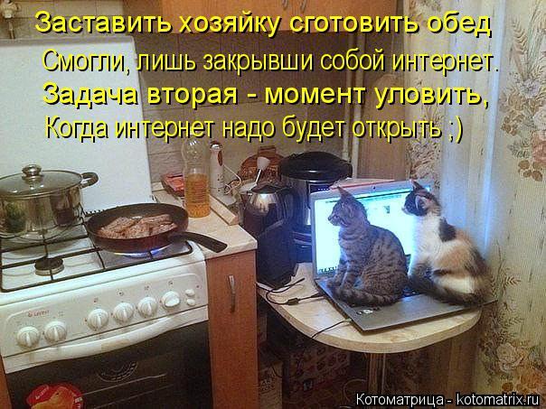 Котоматрица: Заставить хозяйку сготовить обед Смогли, лишь закрывши собой интернет. Задача вторая - момент уловить,  Когда интернет надо будет открыть ;)