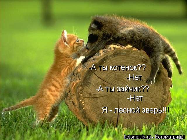 Котоматрица: -А ты котёнок?? -А ты зайчик?? -Нет. -Нет. Я - лесной зверь!!!