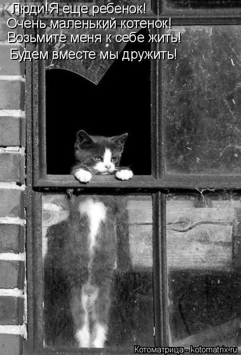 Котоматрица: Люди!Я еще ребенок! Очень маленький котенок! Возьмите меня к себе жить! Будем вместе мы дружить!